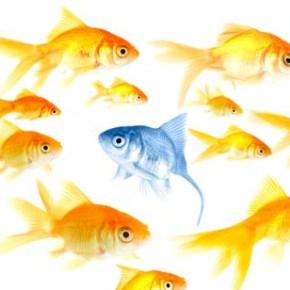Učinkovito upravljanje z raznolikostjo pri zaposlovanju v javnemsektorju
