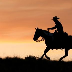 Zaupanje pride peš, odide pa na konjskemsedlu