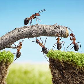 Skupinski zanos ali kako lahko skupaj uživamo pridelu